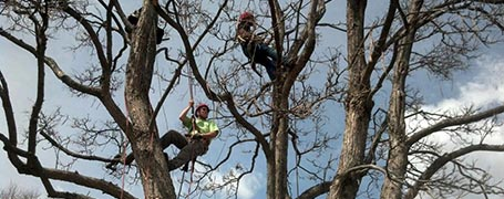 How Tree Services Affect The Real Estate Industry